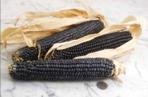 Jenis jagung dari varitas yang mendukung perbaikan indikator suksesnya diet.
