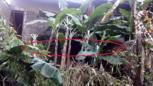 Growong di bawah rumah nomer 26 dan 27 serta tanah lempung tersisa yang rawan longsor lagi.